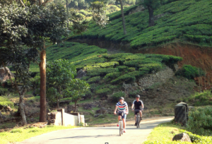 Ride the tea country  in upland Sri Lanka